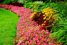 Majestic Colors in a flowing garden