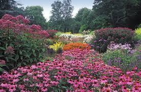 beautiful wildflower garden photo