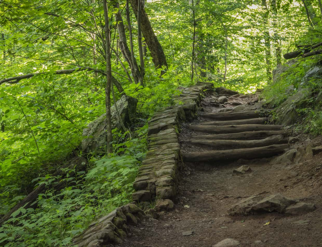 Hiking trail in Shenandoah National Park
