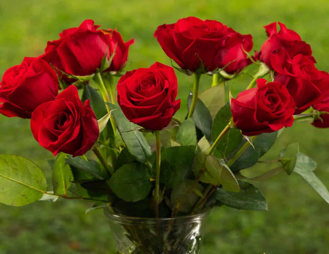 A dozen red roses in a glass vase