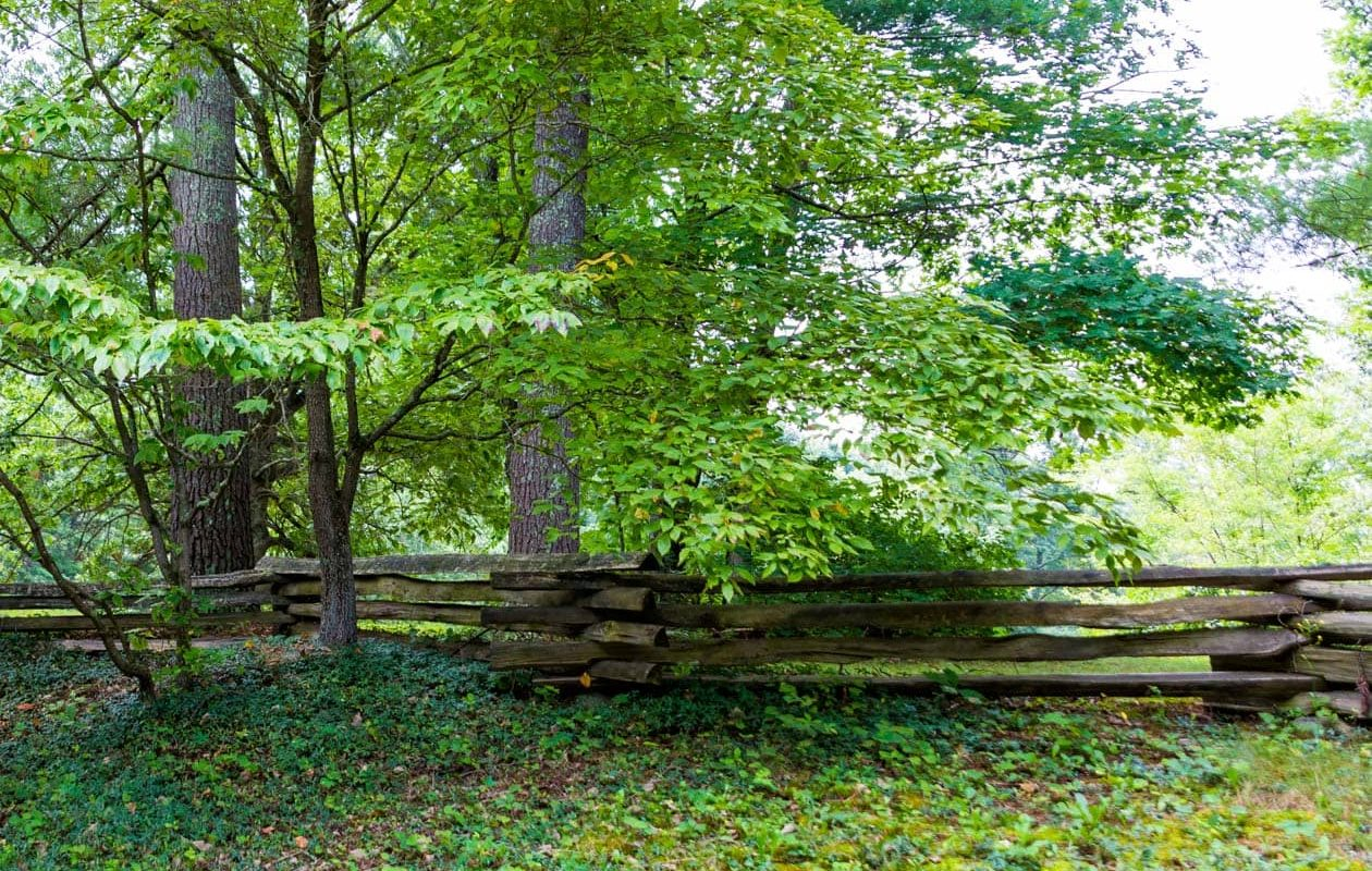 Forested woody area with a wooden plank fence