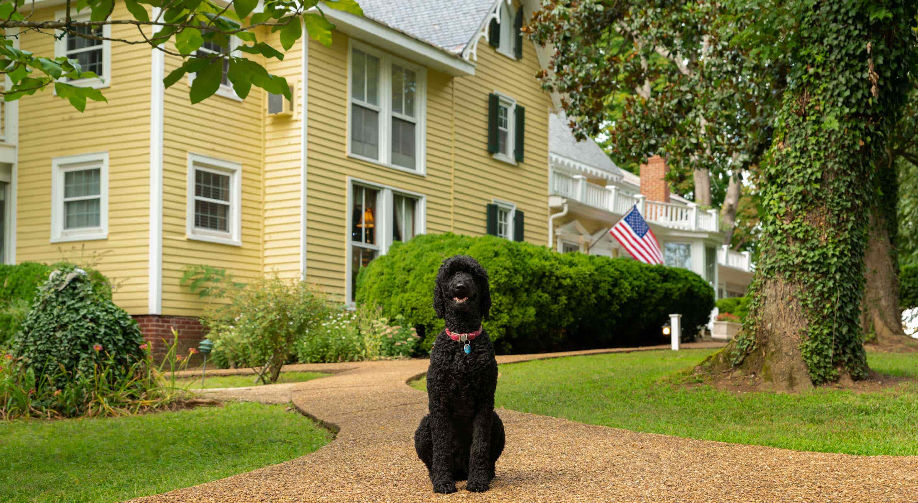 A black poodle sitting in front of Prospect Hill Inn