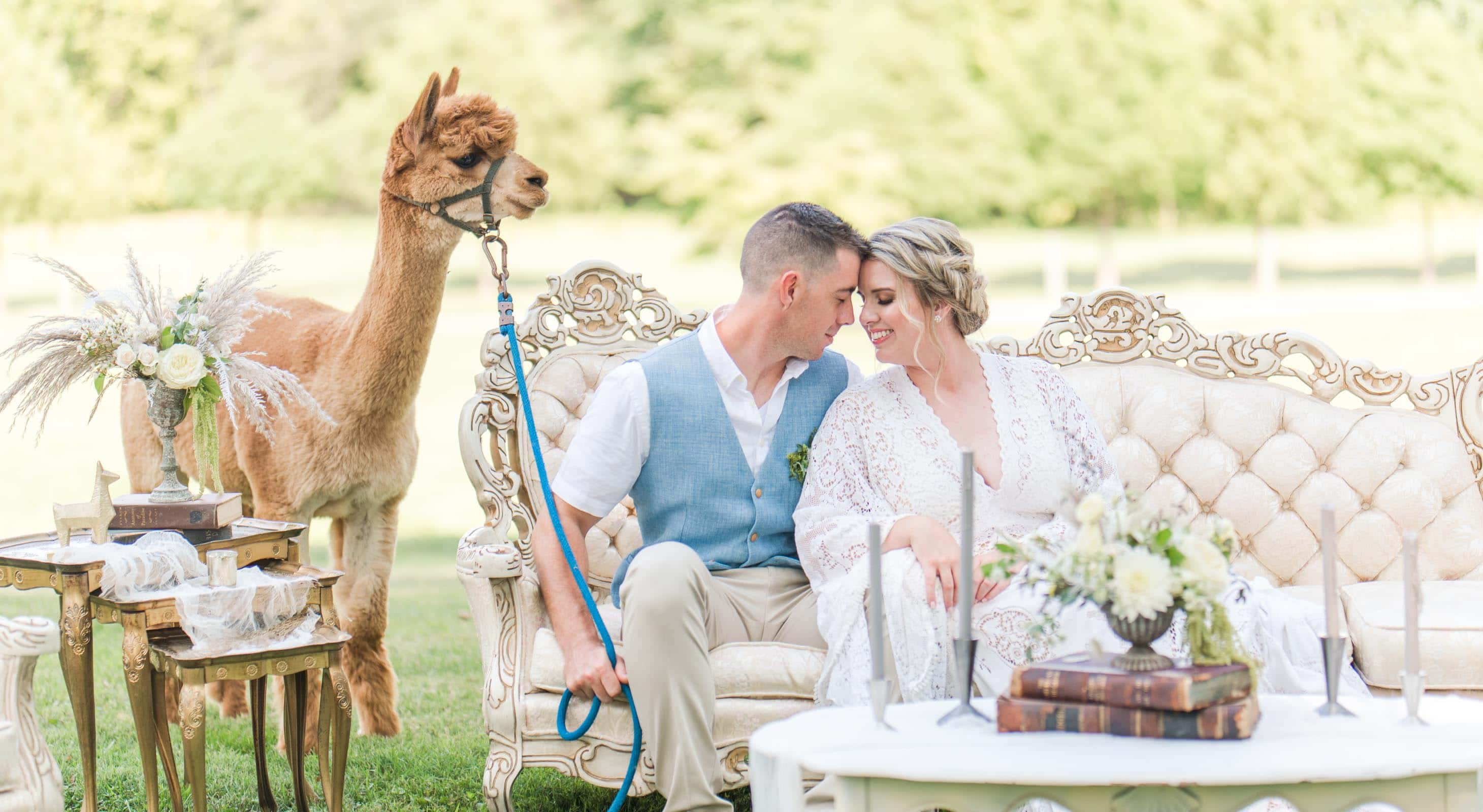 A couple sitting on a couch with a lama at their Prospect Hill Wedding