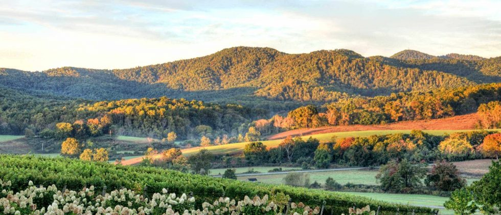 A vineyard in Virginia with the golden sunlight cresting the mountains