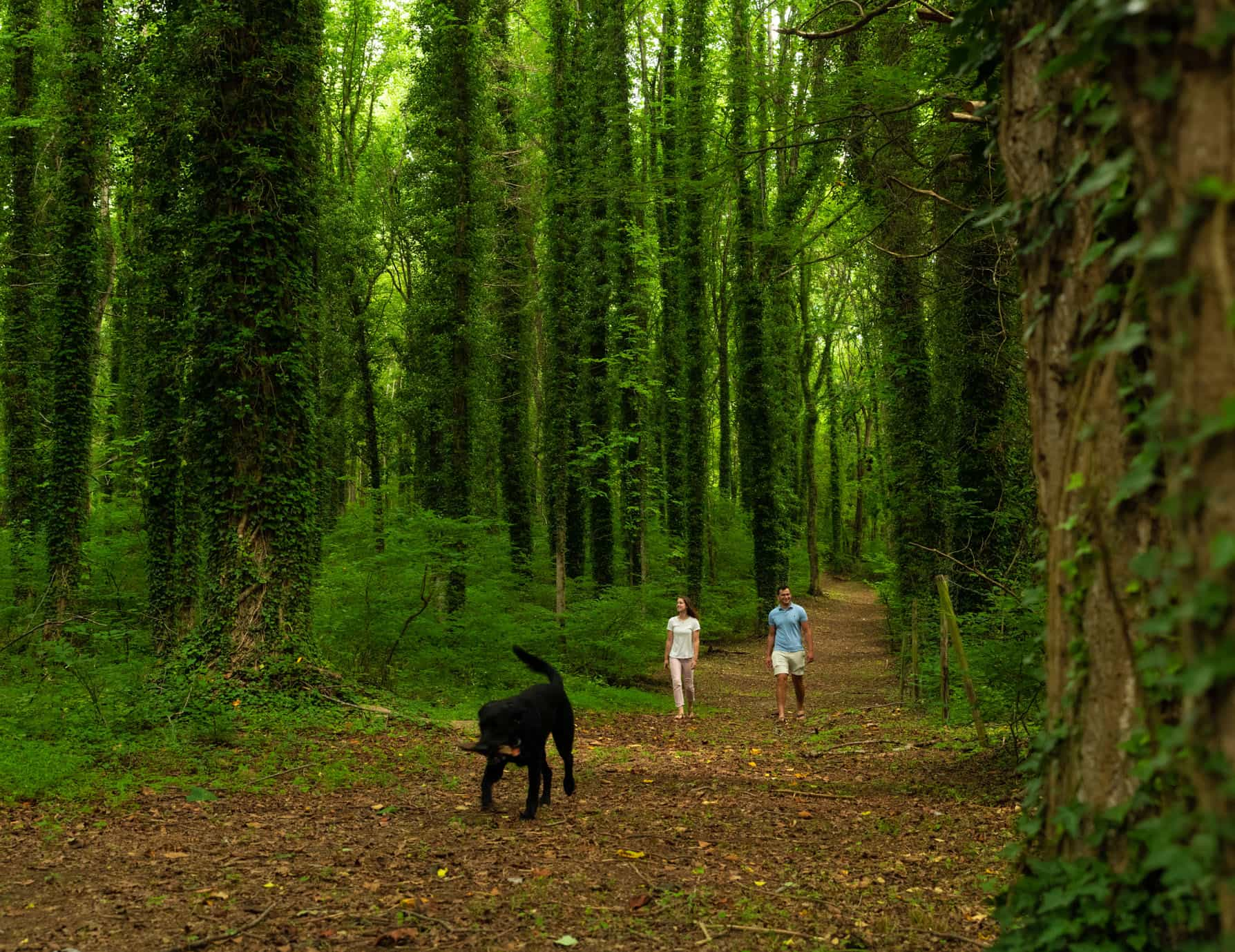 Couple and their dog walking on the nature trail in the Virginia countryside at Prospect Hill Inn
