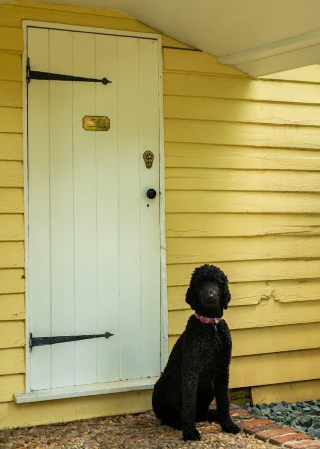 A black poodle sitting outside of a Cottage at Prospect Hill