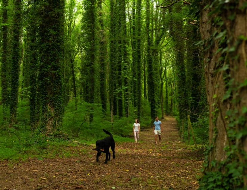 A couple walks a dog on a nature trail at Prospect Hill Inn
