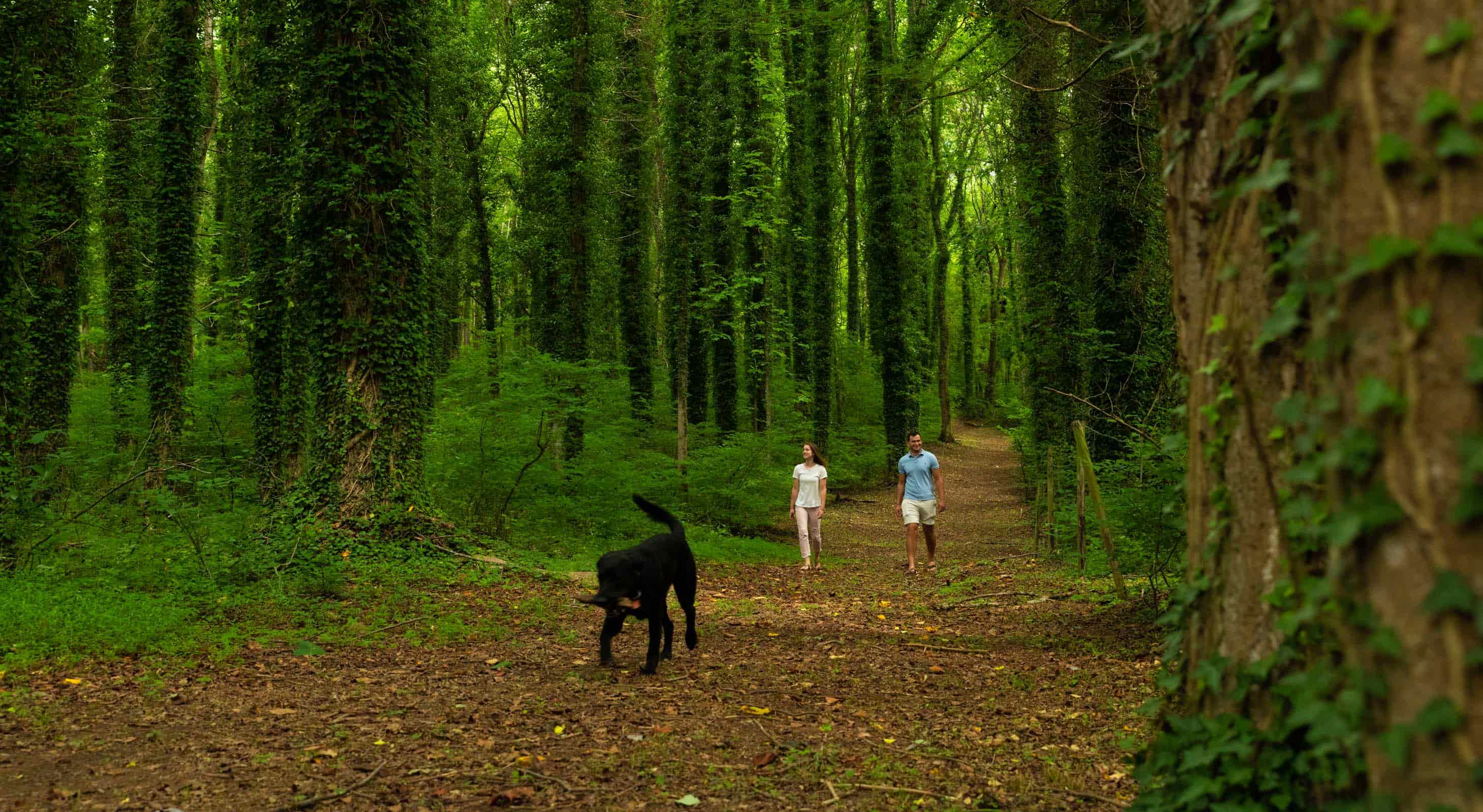 A couple walks a black dog on a wooded nature trail at Prospect Hill Inn