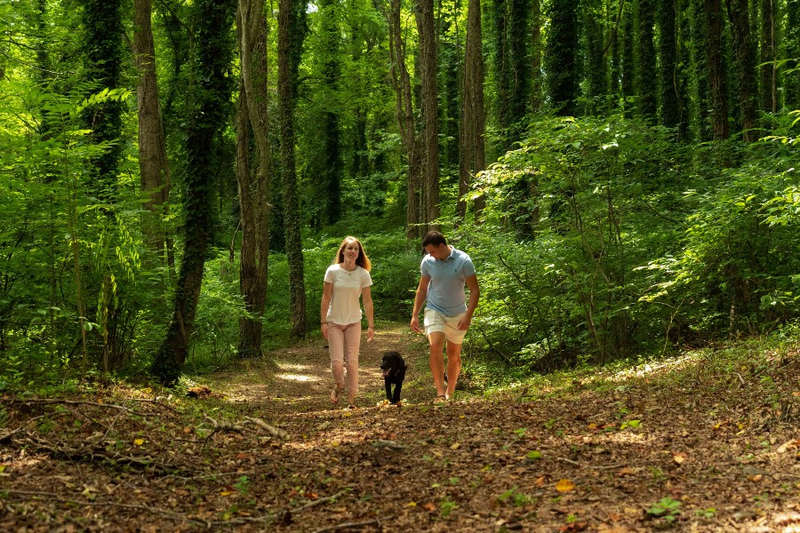 Romantic couple walking through woods with black dog